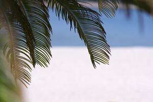 palmtree02